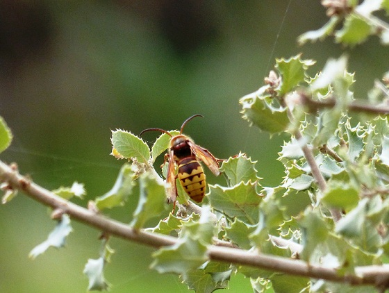 El fin de semana pasado estuve en una dehesa de Toledo y me llamó la atención la cantidad de insectos que había.                  Mónica Fernández-Aceytuno  AUTOR DE LA FOTO: Ramiro Pérez-Maura