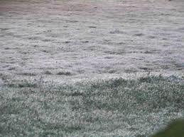 Helada sobre la hierba / Aceytuno