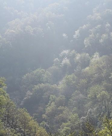 Esto es lo que tengo en la cabeza ahora mismo. Las manchas blancas, son cerezos silvestres florecidos entre el humo.  Mónica Fernández-Aceytuno