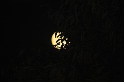 Esta luna llena de noviembre toca las ramas de los castaños donde veo, como sumergidos en la luz,la sombra de los peces y de los pájaros y de un gato que las hojas imaginan.  Mónica Fernández-Aceytuno