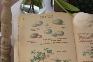 Huevo de acentor ilustrado por Edith Holden