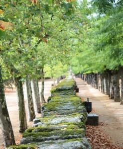 Muro cubierto de musgos / Aceytuno
