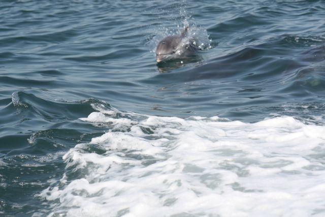 El delfín y el libro del agua
