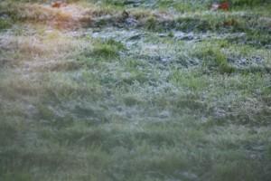 Hierba helada tras el cristal / Aceytuno