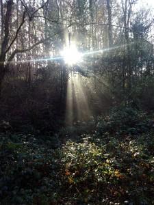Luz de bosque al atardecer el 2-1-2015 / Aceytuno