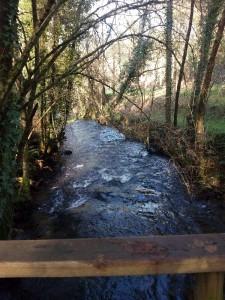 Río de los Caballos orlado de ameneiros el 2-1-2015/ Aceytuno