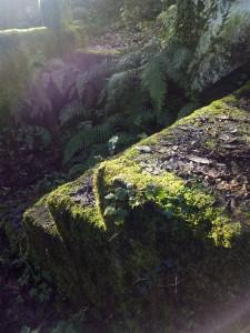 Piedras humeando con el sol el 2-1-2015/ Aceytuno