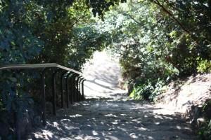 Escalera del parque de la Fuente del Berro el 10-1-2015/ Aceytuno