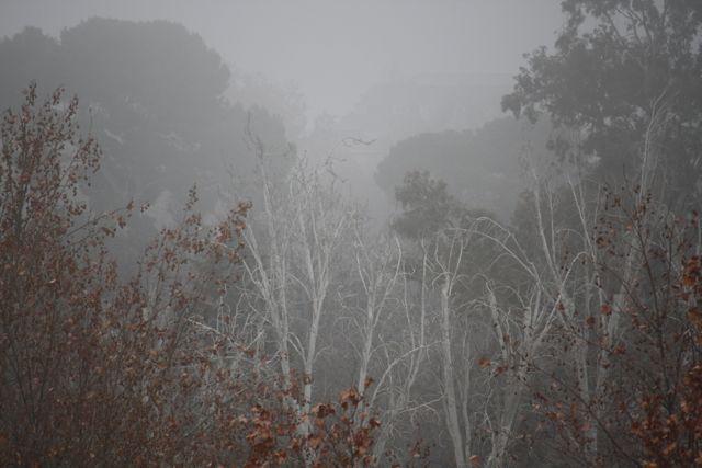 Niebla, esta mañana