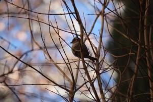 Libre entre los barrotes de las ramas / Aceytuno