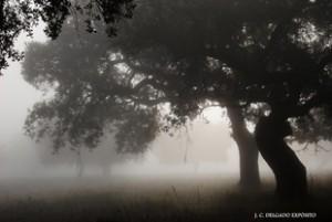 Niebla en la dehesa de Fregenal de la Sierra / Juan Carlos Delgado Expósito