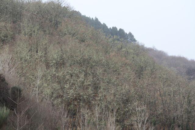 Bosque verde sin hojas