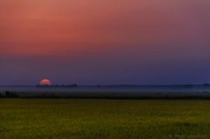 Puesta de sol en los arrozales de Puebla del Río (Sevilla) / Begoña Sánchez