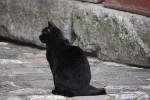 Gato y señor de este patio / Aceytuno