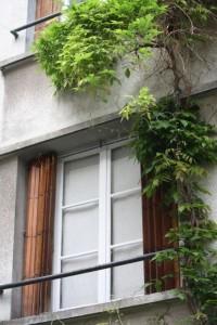 Glicinia subiendo por mi ventana en París / Aceytuno