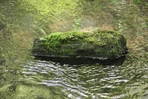 Piedra del río donde se suele posar, como en una isla, el mirlo acuático / Aceytuno