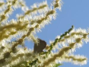 Flores castaño-2