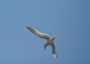 Las alas parecen brazos, muy largos, que dobla igual que una persona por los codos / Aceytuno