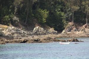 Cerca del mar, con las raíces en la roca, como una barca amarrada a tierra, florece el hinojo marino / Aceytuno