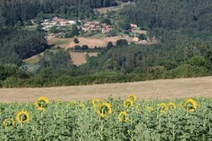La aldea y el girasol / Aceytuno