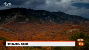 Bosque de Otoño / Fundación AQUAE