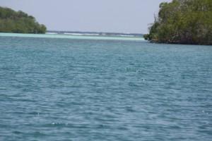 Salida del manglar al océano / Aceytuno