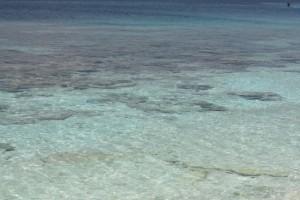 Fondos coralinos de Morrocoy/ Aceytuno
