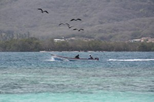 Fragatas siguiendo a los pescadores / Aceytuno