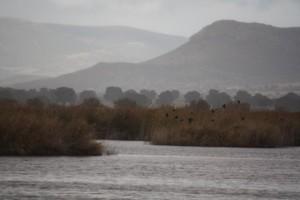 Foto de archivo: Daimiel bajo la lluvia / Aceytuno