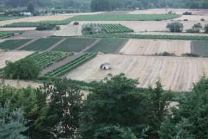 Huertas y sembrados visto desde la era de Tricio (La Rioja) / Aceytuno