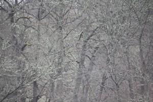 Bosque verde sin hojas por los líquenes / Aceytuno