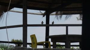 Pájaros a la sombra / Aceytuno