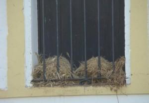 Nido de gorrión común en la ventana / Juan Carlos Delgado Expósito