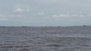 Palmeras del Río