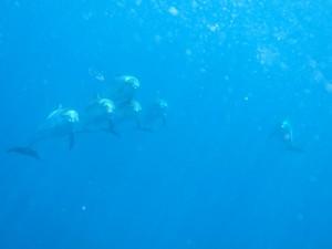 Delfines haciendo aros de aire / Cristóbal Richart