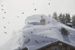Chovas en bandada buscando alimento alrededor de las cabañas de la alta montaña/  Los Alpes / Aceytuno