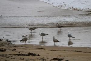 Gaviotas en la playa bajo la lluvia / Aceytuno