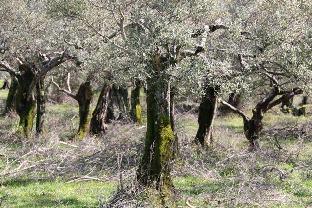 Sierra de Gata