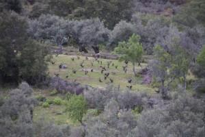 Viñedo entre olivos en la falda de la sierra de Gata / Aceytuno