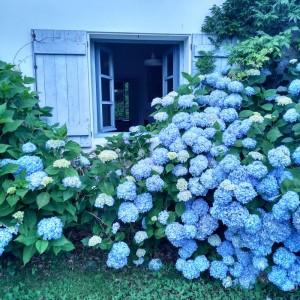 Hortensias azules en la ventana de la cocina / Aceytuno