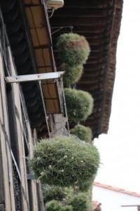 Hierbas del aire en Santillana del Mar / Aceytuno