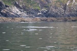 Cría de delfin cerca del acantilado / Aceytuno