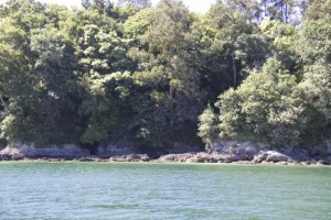Los árboles llegan hasta la orilla de la ría como si no supieran muy cuál es su papel si de costa marinera o de monte / Aceytuno
