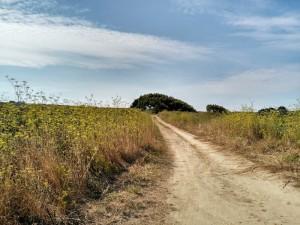 Eneldos florecidos y sabinas por el camino / Aceytuno