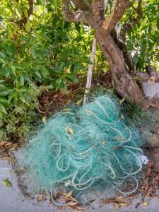Verdor de redes y de ramas / Aceytuno