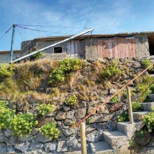 Escalera de las casetas donde los marineros guardan los barcos, florecida de hinojo marino / Agosto 20016 / Aceytuno