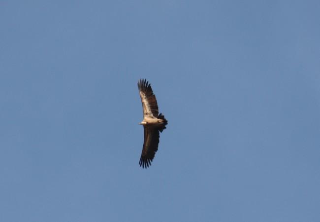 vulturno.