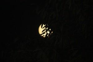 Luna y hojas de castaño / Aceytuno