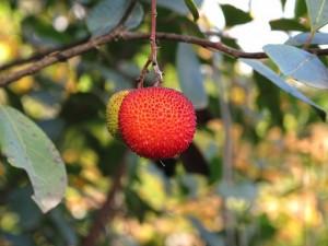 Fruto del madroño / Gonzalo del Río