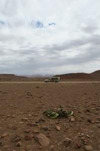 Soledad de la Welwitschia mirabilis / Namibia, diciembre 2016 / Aceytuno